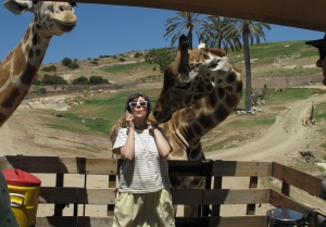 A Giraffe Kiss in Exchange for Some Acacia Leaves